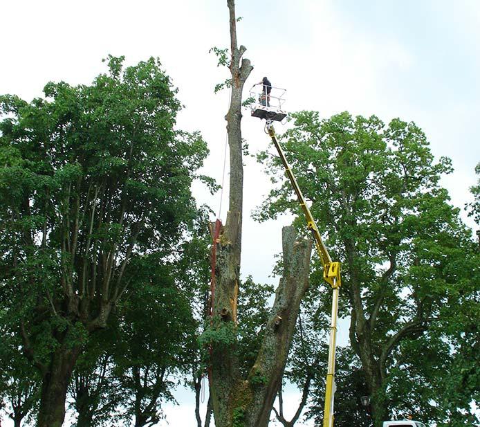 Abattage d'arbres Saint-Etienne