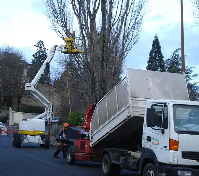 Taille d'arbres pour collectivité à Saint-Etienne
