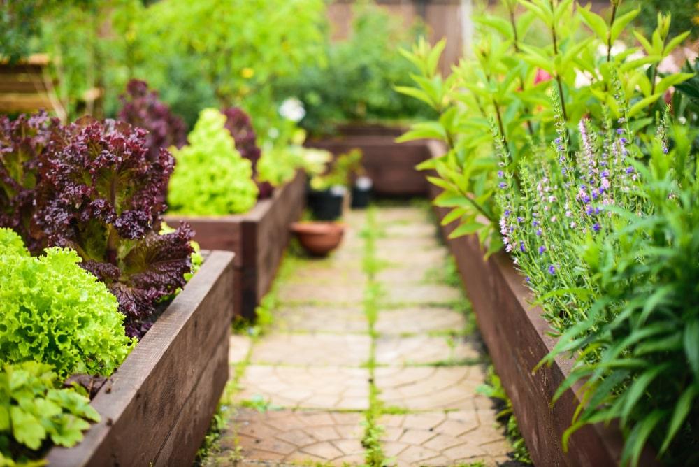 Aménagements de jardins à Saint-Etienne