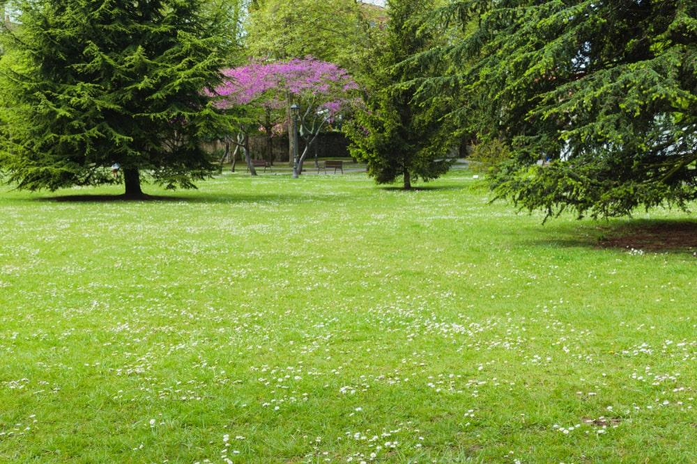 Aménagements de jardins et de terrasses à Saint-Etienne